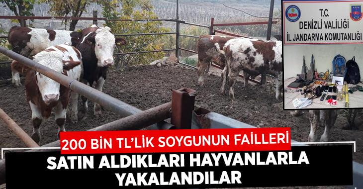 200 Bin TL Çaldılar, Satın Aldıkları Hayvanlarla Yakalandılar