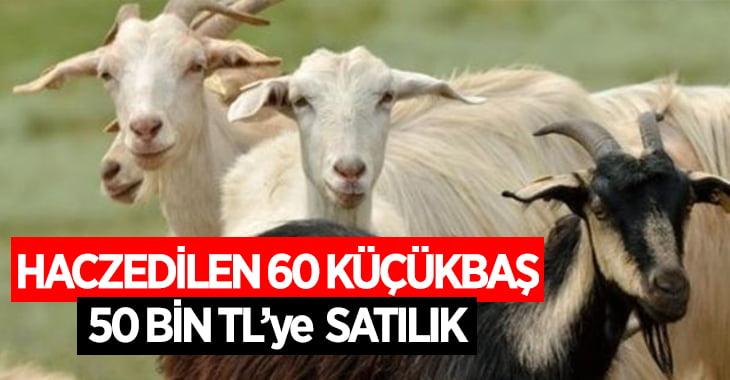 Denizli'de icradan satılık koyun, keçi ve kuzu