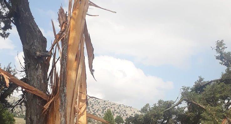 Yıldırım 8 metrelik ağacı ortadan ikiye böldü