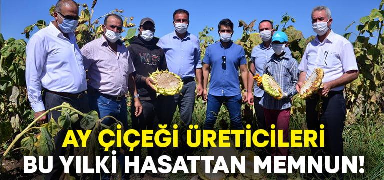 Ayçiçeği üreticileri hasattan memnun!