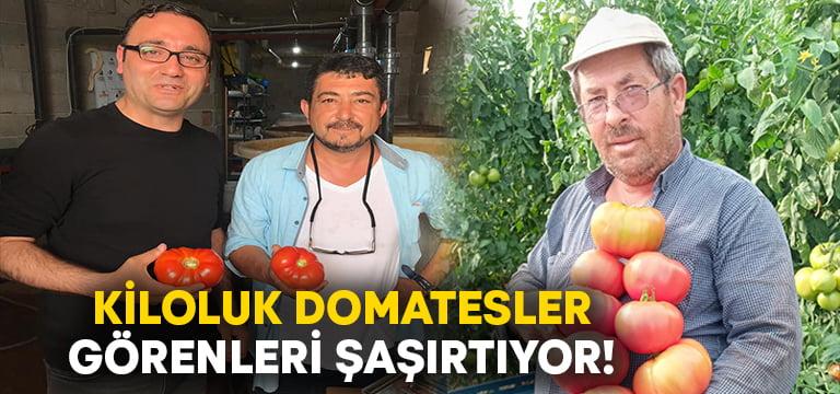 Bu domatesler tam 1 kilo 100 gram!