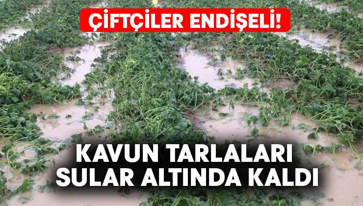 Kavun tarlaları sular altında kaldı.. Çiftçiler endişeli!